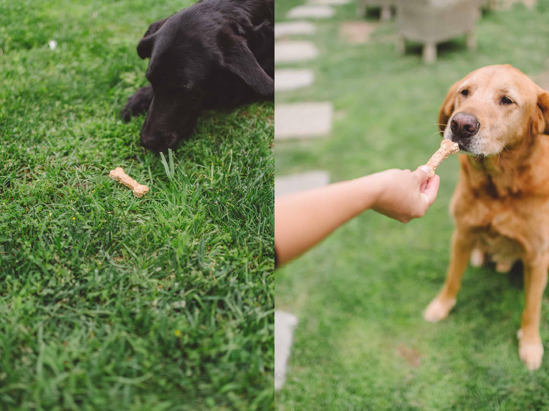 Good Dog by Tiffani Thiessen • Photos by Rebecca Sanabria