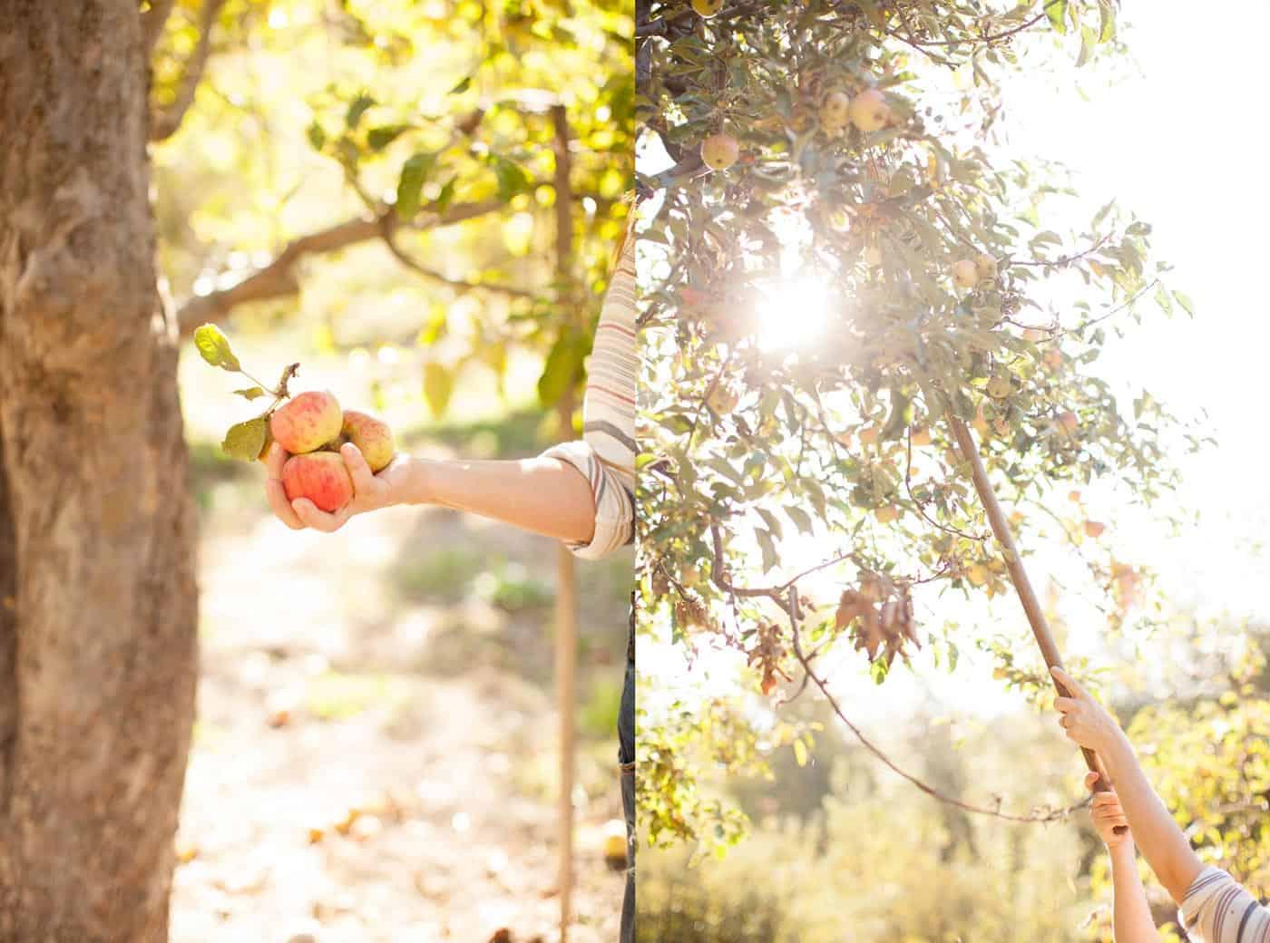Apple of my Eye with Tiffani Thiessen • Photo by Morgan Pansing